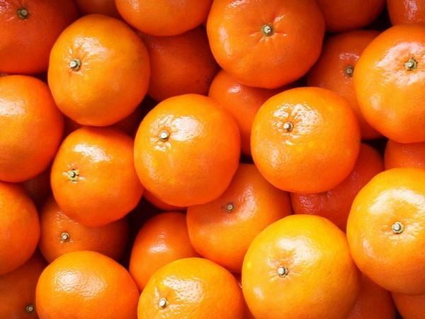 Cómo plantar mandarinas. Ficha completa b