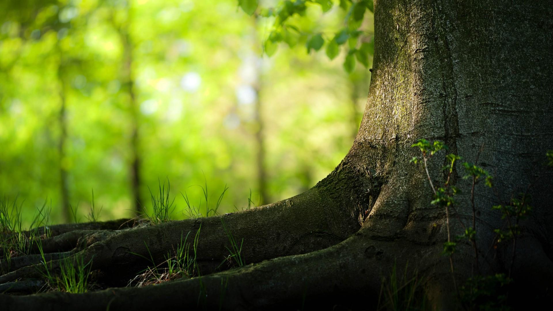 Fondos de pantalla de paisajes naturales medioambiente y for Fondo de pantalla 1080 x 1920