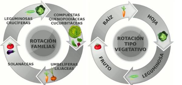 Qué es y cómo se realiza la rotación de cultivos c