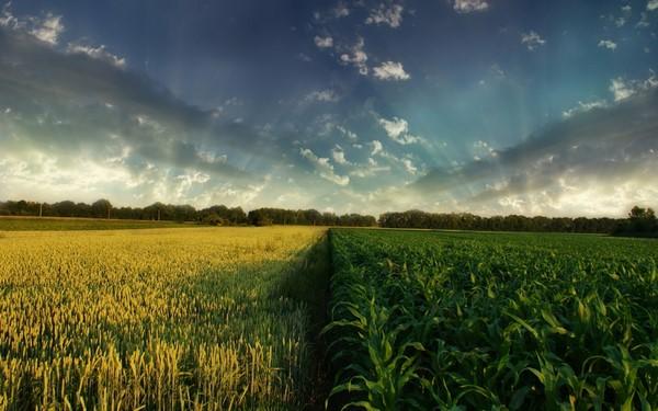 Qué es y cómo se realiza la rotación de cultivos