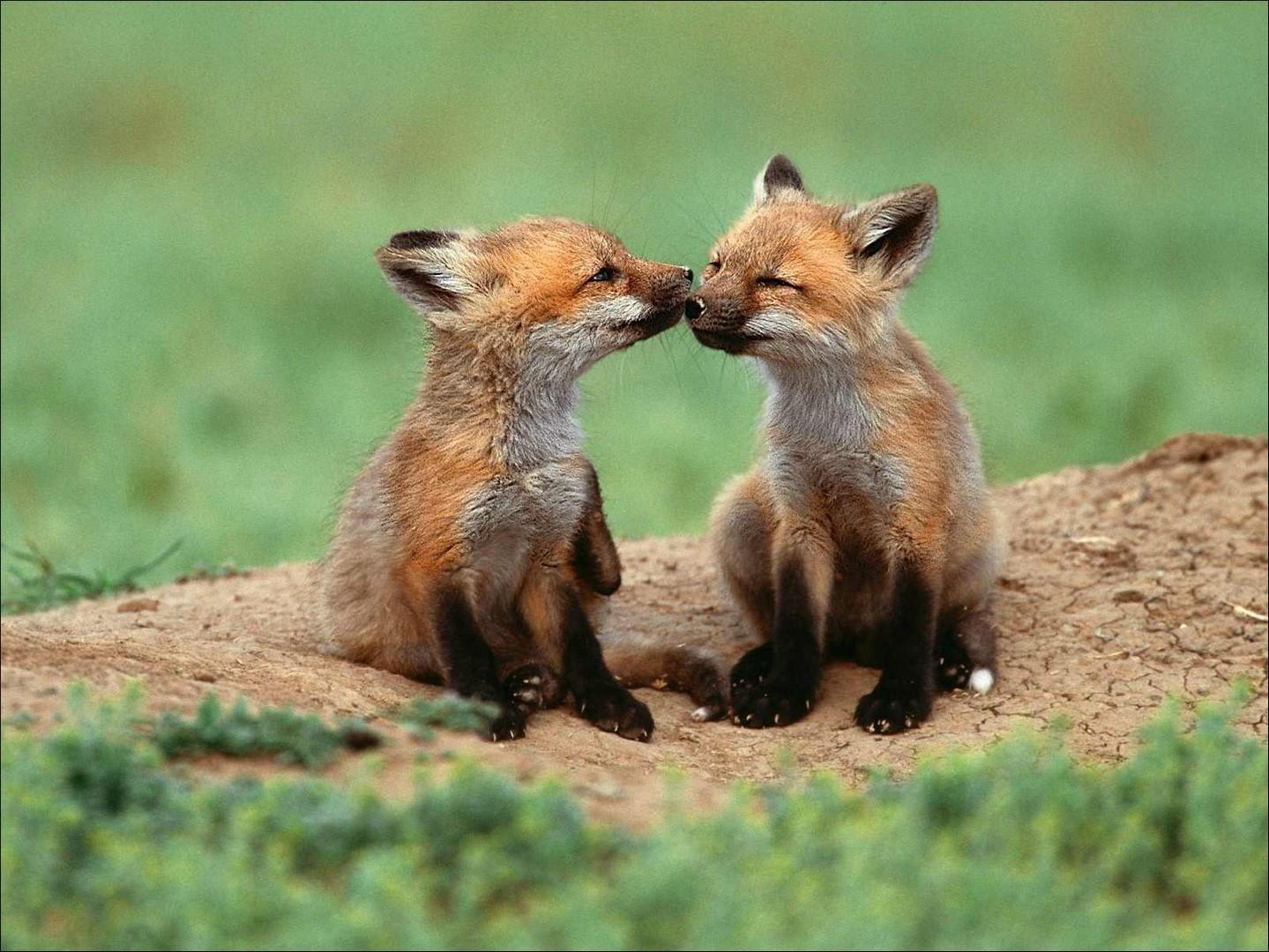 Fondos Animados Para Celular De Animales: Fondos De Pantalla De Animales Tiernos