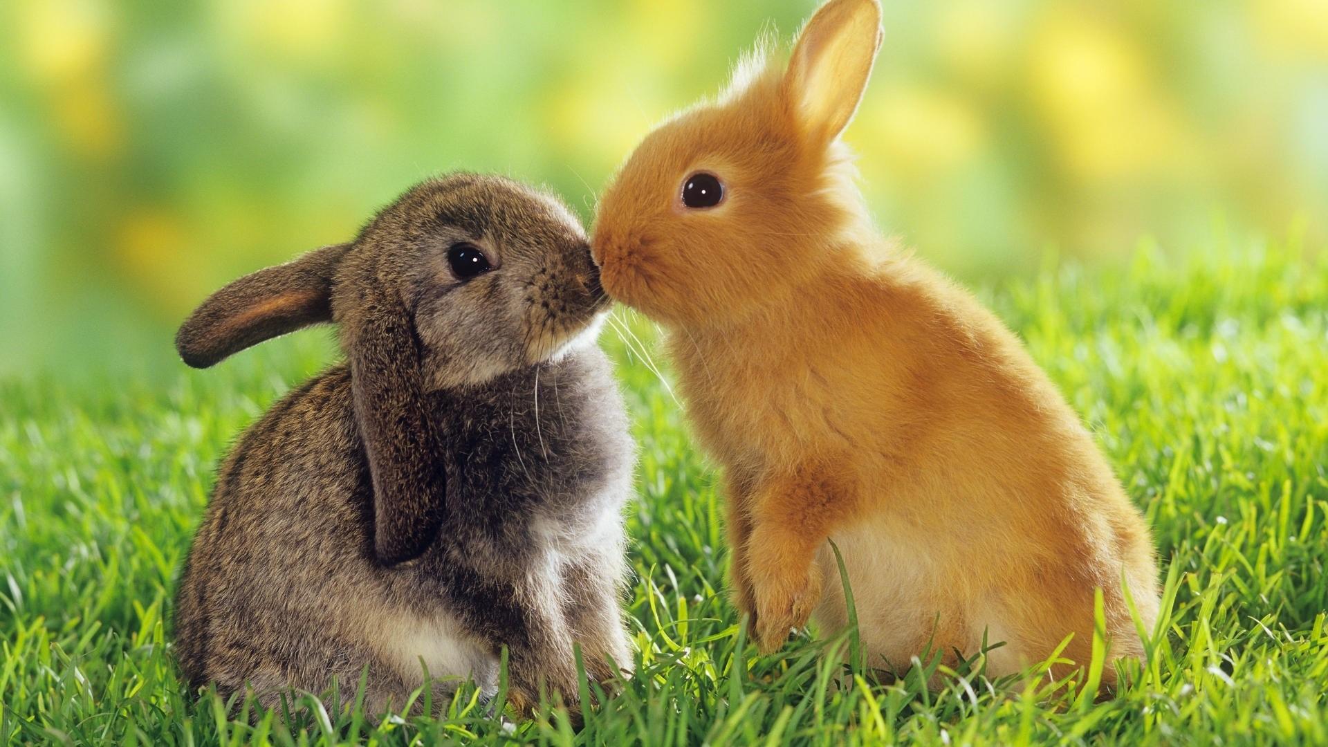 Animales Fondos De Escritorio Hd: Fondos De Pantalla De Animales Tiernos