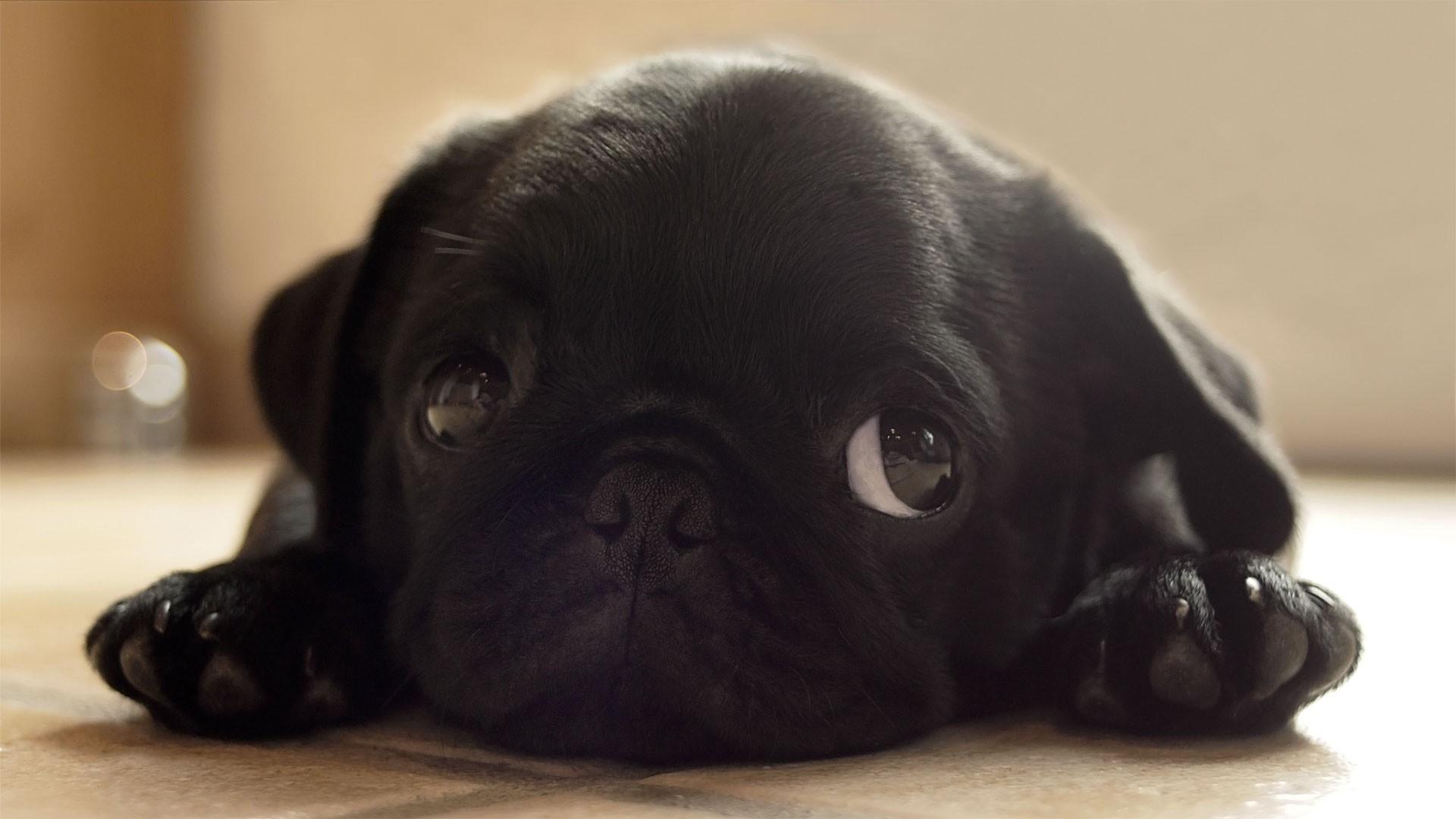 Animales: Fondos De Pantalla De Animales Tiernos