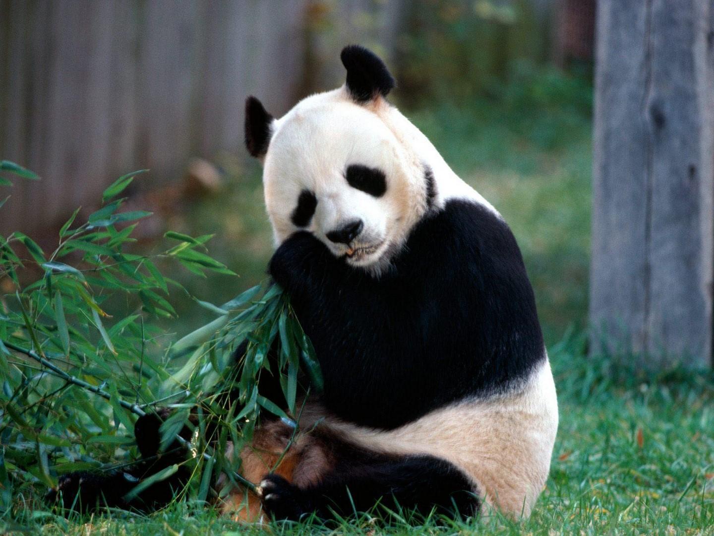 Fondos De Pantalla De Animales Medioambiente Y Naturaleza