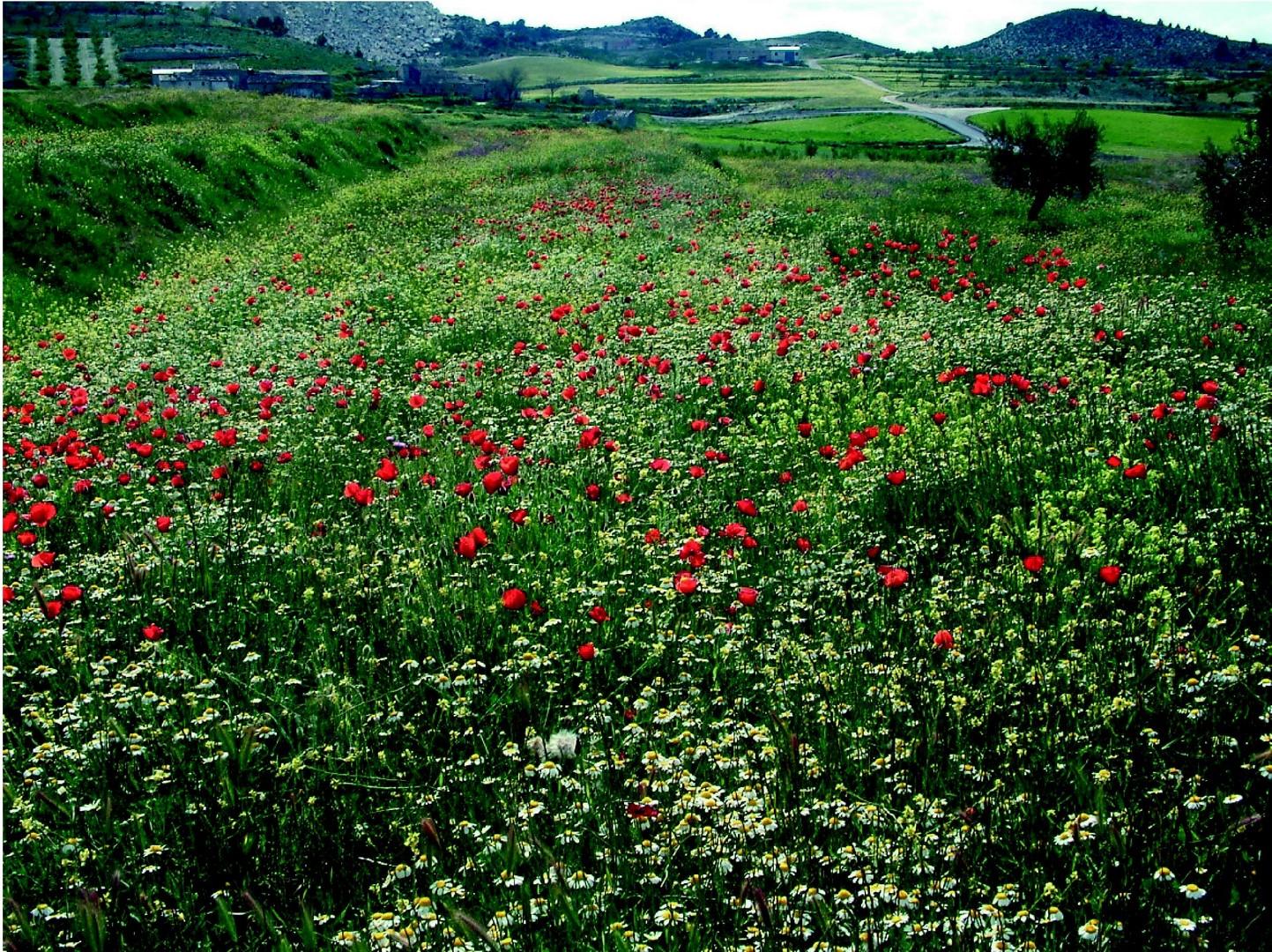 Fondos de pantalla de flora y vegetación ab