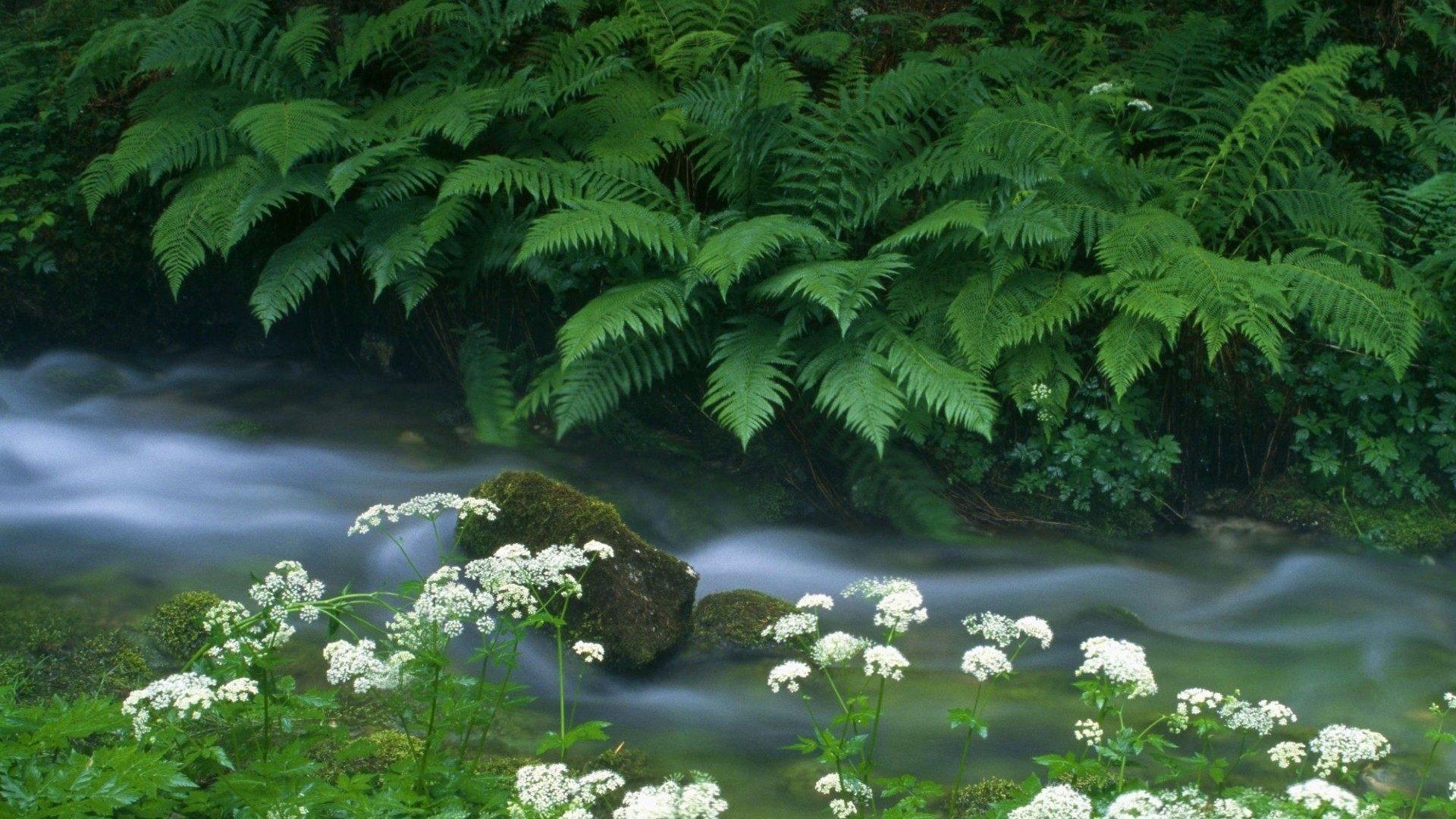 Fondos de pantalla de flora y vegetación ag