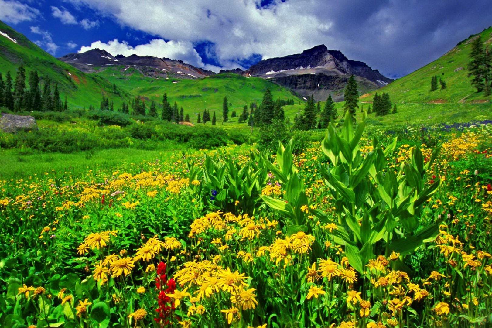 Fondos de pantalla de flora y vegetación ao