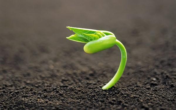 Trucos para conseguir que las semillas duren más tiempo b