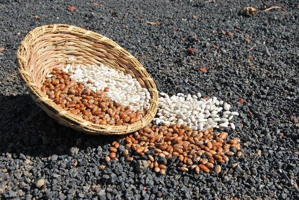 Trucos para conseguir que las semillas duren más tiempo c