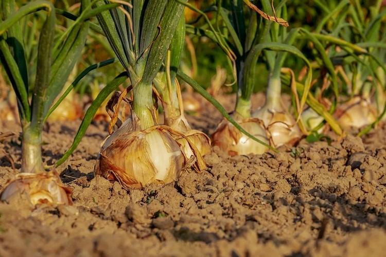 Pesticidas naturales caseros para acabar con las plagas de bichos