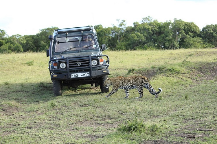 Masái Mara animales y naturaleza en estado puro