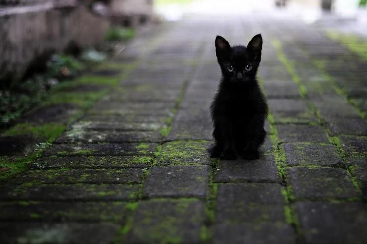 Todo sobre los parásitos en los gatos - fechas, riesgos, prevención y desparasitación